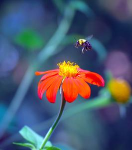 Anticipating Pollination