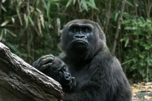 122 patricia zackman ape about you