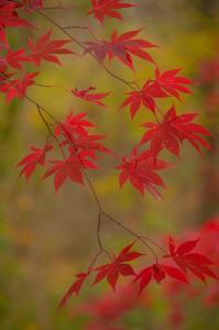 026 bob dowd photography autumn red
