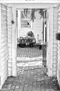 072 tyler nunnallyduck photography coconut cart