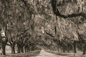 102 kathy watson photography boone hall plantation sc