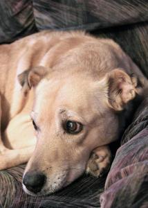 003_debora_bruno_photography_dog-next-door