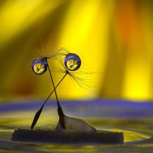 038_lilia_maloratskiy_photography_balet-water-drops-on-dandelion