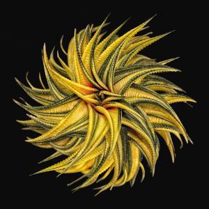 048_vince_matulewich_photography_spiral-succulent