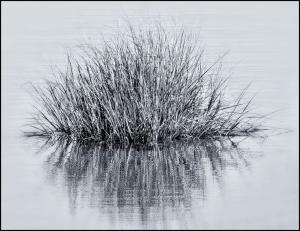 136_photography_marsh grass