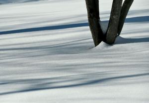 179_photography_winter shadows