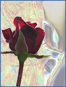 Red Rose I