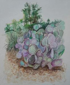Prickly Pear Cactus, Sedona