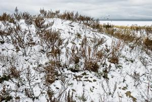 Dune in Snow, Sandy Hook