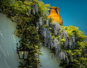 Trulli Roof Garden