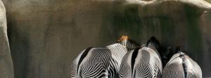 Zebra Strategy Conference