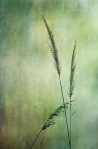 017 vicki devico grasses