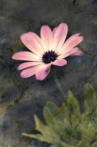 054 michael marino flower