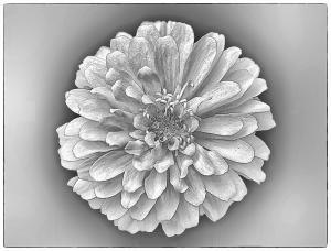 089 debra resch zinnia