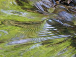 097 ellen rubinstein ripples