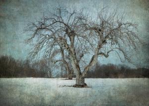 067 vicki devico photography apple tree