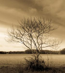 076 jon kimreuter photography after eden