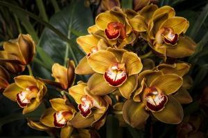 088 michael menendez photography orchids deep cut 1