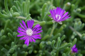 073 janine morales arizona desert flowers