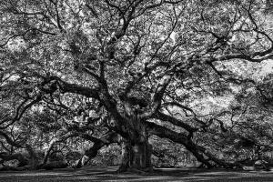 025 vicki devico photography angel oak