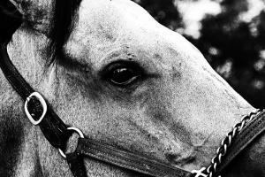 054 michael marino horse