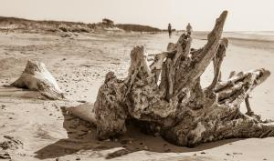 104 kathy watson dewees island beach