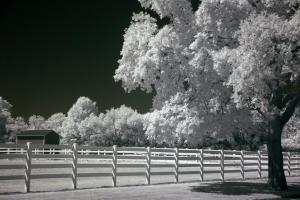 40 michael marino photography infrared tree 1