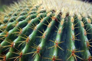 56 tyler nunnallyduck photography hypnotic cactus