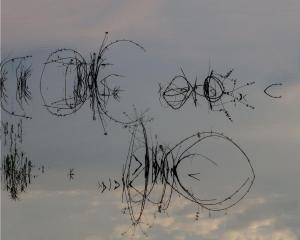 003 cheryl auditor water twigs