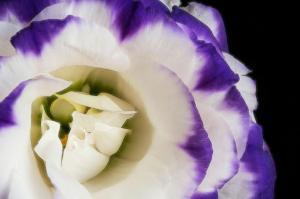 008 beverly burke lisi bloom