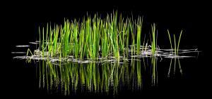 010 Robert Campbell bog grass