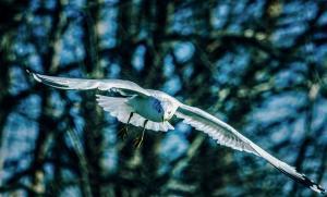 020 ed deverell flyby
