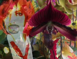 048 grace modla dream of orchids iv