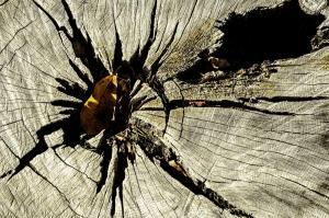 052 joan myers abandoned tree
