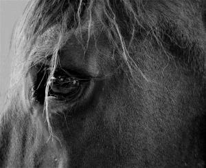 077 rosemarie reinman close-up