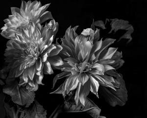 046 bonnie kamhi photography rebirth