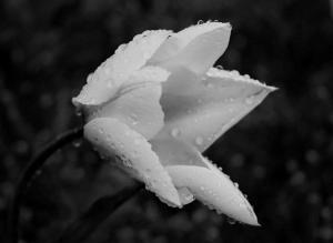 066 tyler nunnallyduck photography morning dew