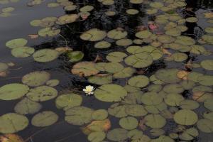 076 linda relyea photography single lily