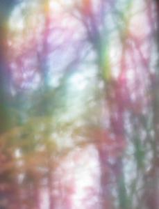 081 ellen rubinstein photography rainbow woods