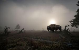 087 irina shoyhet photography sunrise and the beast