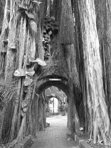 225 ellen rubinstein banyan portal