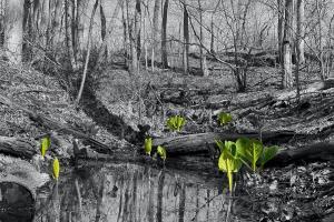 026 gwynneth green photography new reality