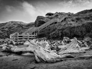 041 bogumil kozera photography driftwood