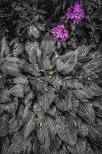 011_cheryl_bomba_falling_petals