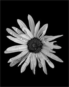 073_patricia_mottola_imperfect_flower