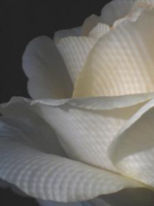 102_ellen_rubinstein_petals